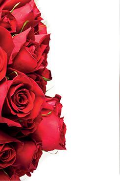 Adora Wasserbettduft Rose