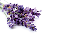 Adora Wasserbettduft Lavendel